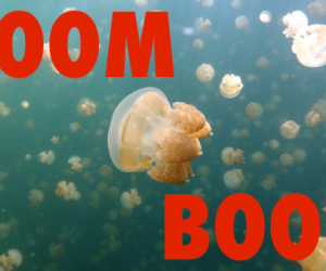 "Deep Sea News features ""Boom Boom Jellyfish"" by DJ Jellyfish"