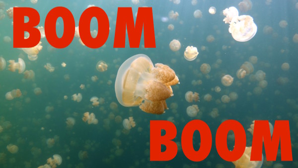 Deep Sea News Boom Boom Jellyfish DJ Jellyfish Feature